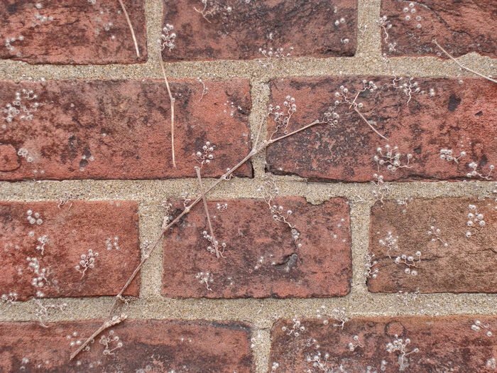 Dead Leaf Architecture Backgrounds Brick Brick Wall Close-up Day Full Frame No People Outdoors Japan レンガ 枯葉