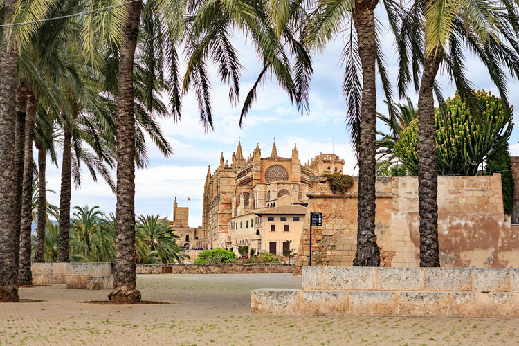 Santa Iglesia Catedral de Mallorca in Palma de Mallorca town on Mallorca Island, Spain Santa Iglesia Catedral De Mallorca Architecture Mallorca Palma De Mallorca Vacations Ancient Ancient Civilization Archaeology Architecture Building Building Exterior Built Structure Coconut Palm Tree Date Palm Tree Day History Island Nature No People Old Outdoors Palm Tree Plant Ruined Sky The Past Travel Travel Destinations Tree Tree Trunk Tropical Climate