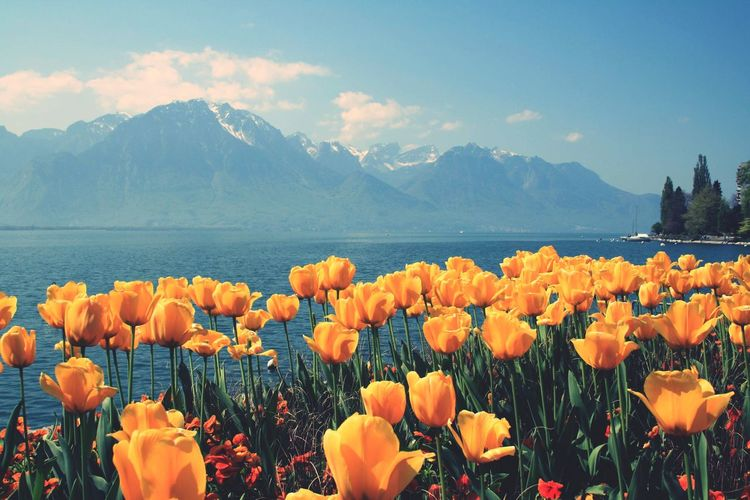Lake Flower Flowering Plant Beauty In Nature Plant Sky Mountain Nature Water Cloud - Sky Scenics - Nature Freshness Growth No People Lake Vulnerability  Landscape Tranquility Fragility Mountain Range Outdoors