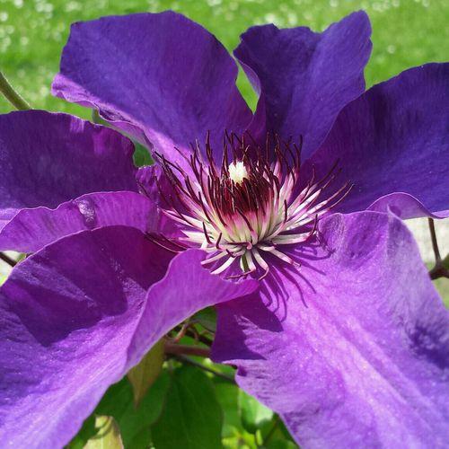 Purple beauty EyeEm Nature Lover Nature Flower Green