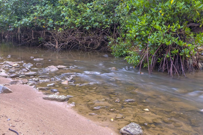 Mangrove along a tidal creek, in Darwin, Northern Territory, Australia. Ecosystem  Day Environment Fragile Environment Mangrove Mangrove Roots Nature No People Outdoors Plant Water