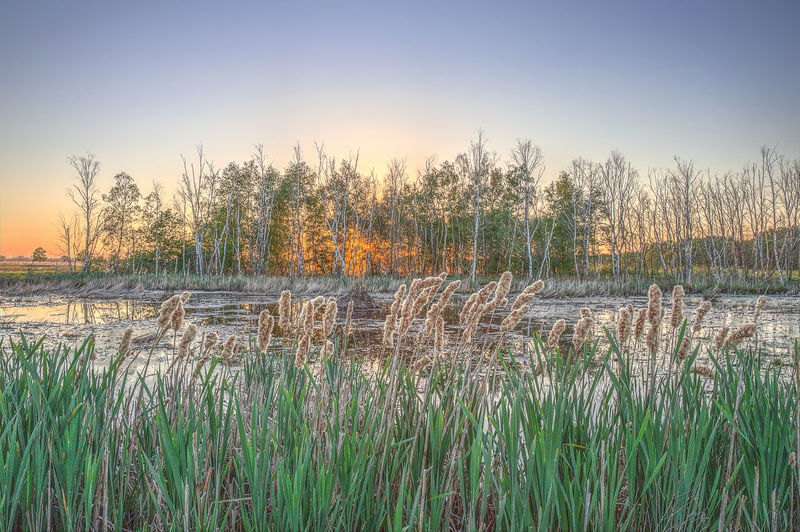 Sonnenuntergang am Großen Torfmoor in Hille HDR Sonnenuntergang Torfmoor Beauty In Nature Grass Hille Lake Land Landscape Nature No People Non-urban Scene Owl Plant Scenics - Nature Sky Sunset Tranquil Scene Tranquility Tree Water EyeEmNewHere