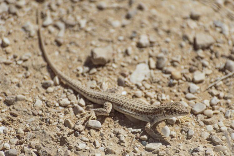 High angle view of lizard on sand