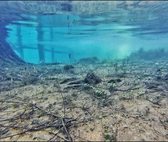 Water Reflections Underwater Underwater Photography Reflections Sunrays Sunrays Underwater Mirror Reflection Mirror Image Clear Water Snorkeling Sandy Bottom Underwater Life Water Sports Water Activities Aqua Color Water Destin,Florida, USA Terquoise Shades Of Blue 2016 People Of The Oceans Color Palette