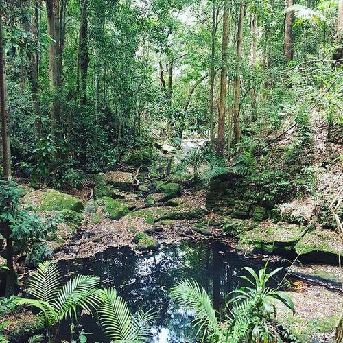 Picture perfect 👌 Kondalillafalls Pretty Adventures Simplelife Beautiful Trees Nature Rainforest Sunshinecoast