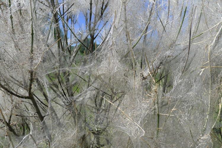 Full frame shot of bare trees