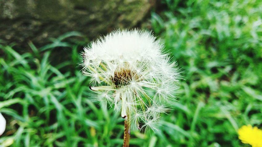 Flowers Flower Flowers,Plants & Garden Garden Perfectflower Whiteflower LoveFlower🌺