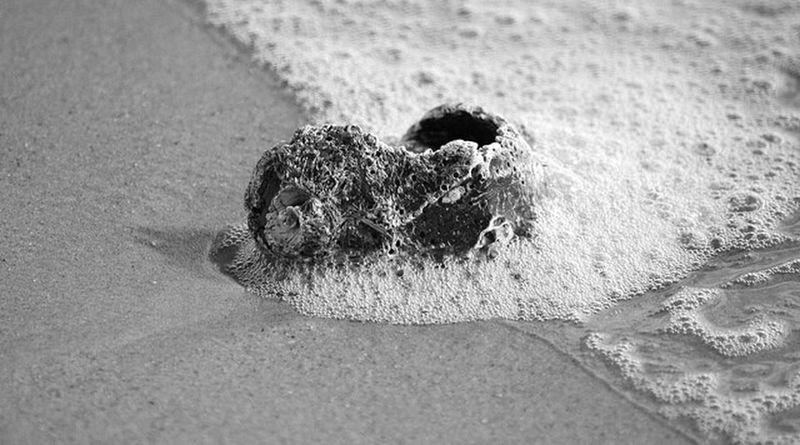 Seashell in the surf. Wrightsville Beach North Carolina Coastal Carolina Seashells Pjpink Life Is A Beach Beach Black And White Black And White Photography Monochrome