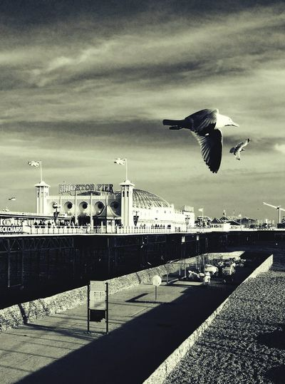 Pier Sea And Sky Seagulls And Sea SEAGULL IN FLIGHT