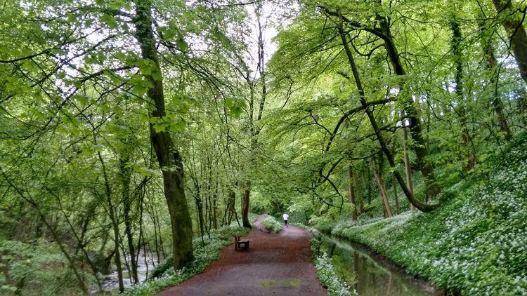 Run For Fun Run Forest Run Run For Health Woods Late Evening Light Skipton Green Nature