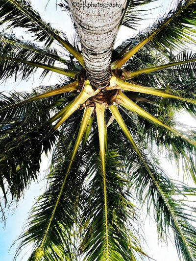 Under the palm tree Tree Palm Tree Outdoors Beauty In Nature Lifeofadventure Explore The World Wanderlust Neverstopexploring  Having Fun :) Sommergefühle