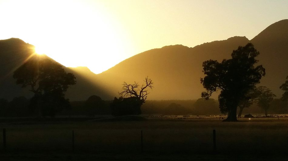 Perfect Day https://youtu.be/9wxI4KK9ZYo Australian Landscape Grampians National Park Dunkeld Silhouette Tree Fields And Sky Hills Eucalyptus Tree Eucalyptus Trees Landscape_photography Landscape_Collection Silhouette Fieldscape Perspectives On Nature