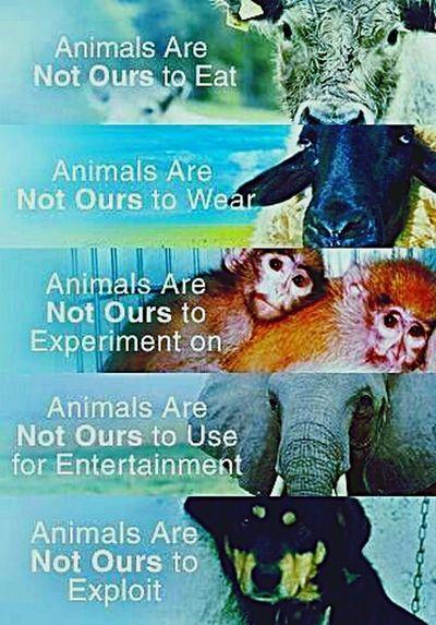 Save Animals