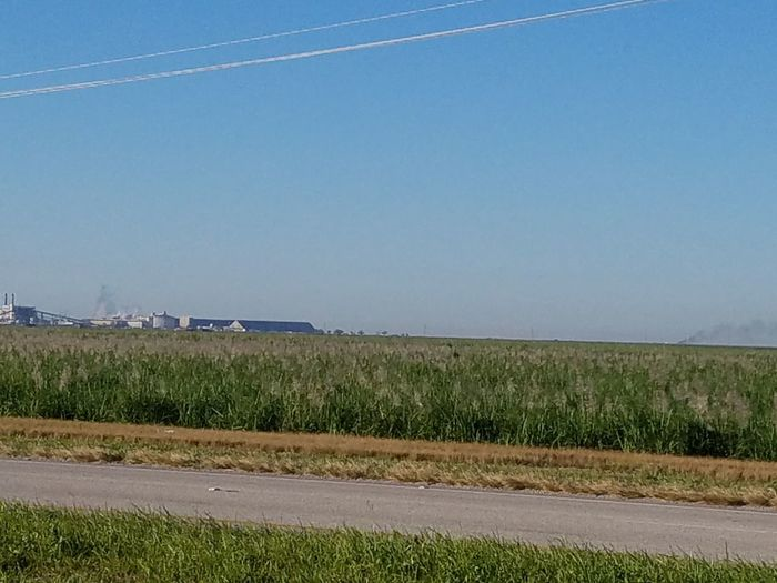 Sugar cane farm Agriculture Field Day Outdoors Growth Nature Rural Scene Landscape No People Sky Clear Sky Scenics Beauty In Nature