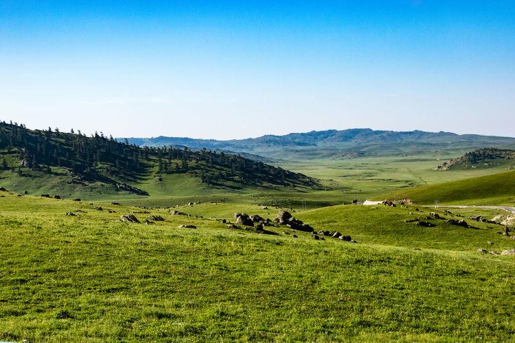 Scenic view of pasture