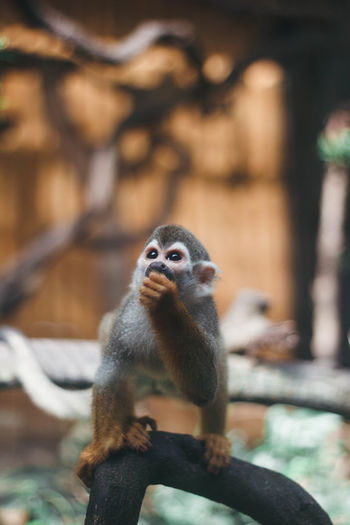 Close-up of monkey sitting on tree in zoo