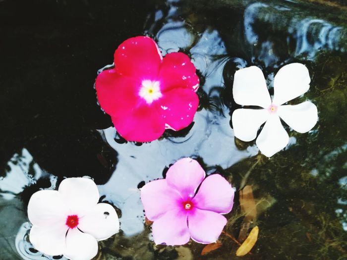 Flower Water
