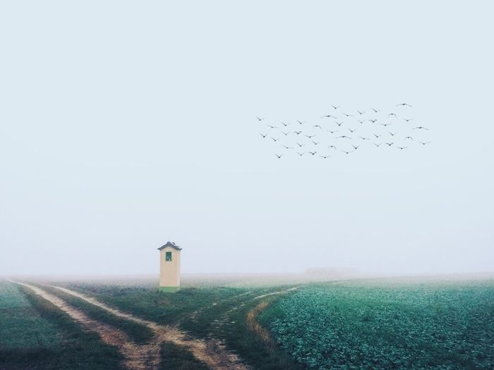 Fog Foggy Foggy Morning Foggy Day Foggy Weather Field Fields Countryside Village Chapel Sacral Place Sacral IPS2015Fall IPS2016Landscape