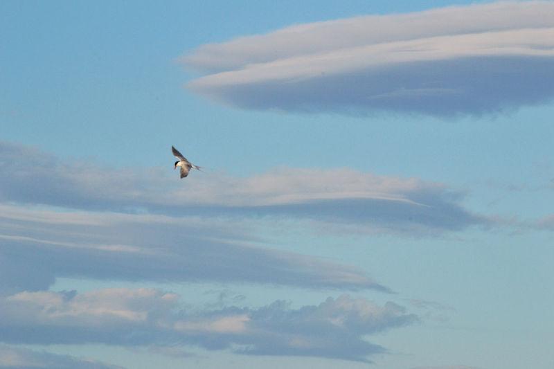Fliying Fliying Birds Sky Clouds And Sky Cloud Landscape Campeche Florianópolis Floripa South Of Brazil