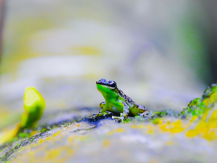 You can see more outside the well bottom. Reptile Animal Themes Close-up Green Color Frog Amphibian