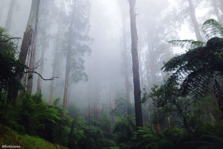 Nature Escaping Rainforest Trees Australian Landscape Travel Misty Forest Taking Photos Nature Photography