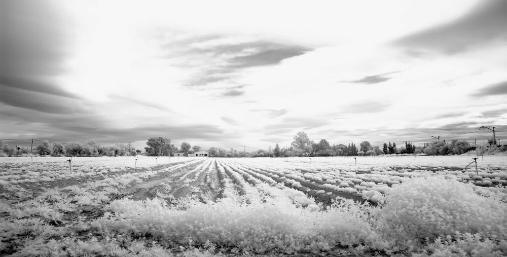 Clouds And Sky Field Infrared Photography Landscape Nature Sky Train Tranquility