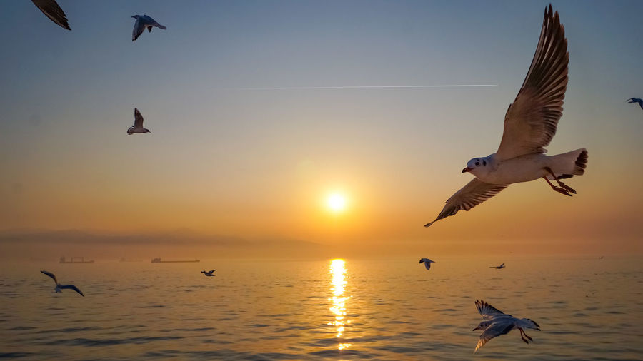 Seagulls flying over sea against sky during sunset