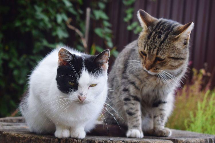 My Love ❤ мои💓 толькоулыбайся толькоучусь Domestic Cat Domestic Animals Kitten Естественность✔ котята котики Meow Meow Meow 🐰🐼❤️🐾🐾🐾❤️ котики😻 котятки Pisicute💞💞 Iubirile💓 Doar Ei🦄❤❤