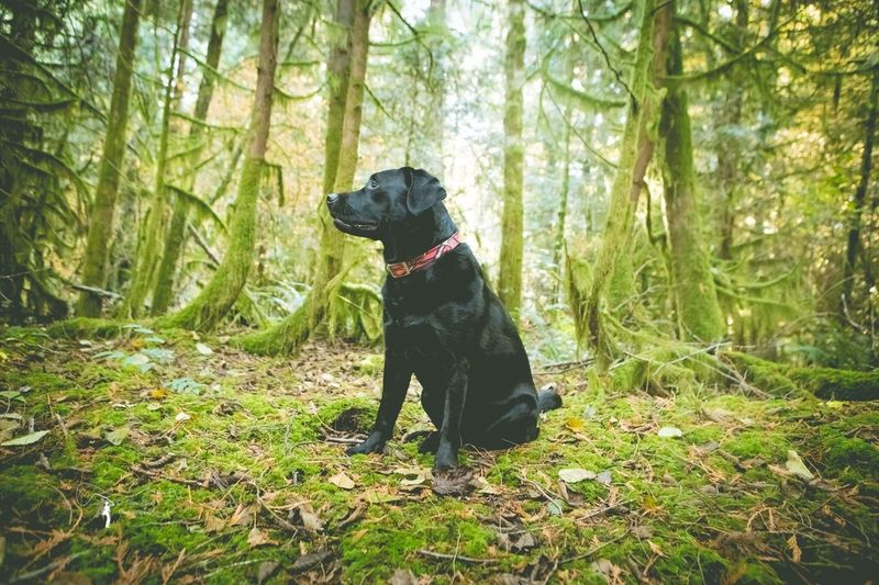 Strike a pose Dog Forest Pets One Animal Tree Domestic Animals Nature Outdoors Animal Themes Black Color No People Black Labrador Labrador Retriever Green Color Sitting Beauty In Nature