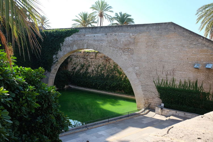Pond & Bridge, Garden Walwway, Avinuga D'Antoni Maura Blue Sky White Clouds Cathedral La Seu City Composition Mallorca Palma Palma De Mallorca Plants SPAIN Scenic Sunlight And Shade Arch Beauty Beauty In Nature Bridge - Man Made Structure Date Palms Full Frame Green Water Growth Nature No People Outdoor Photography Quiet Place  Tranquil Scene Water