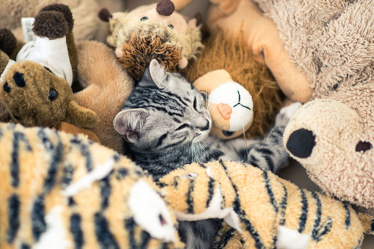 Cat amidst stuffed toys
