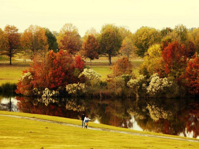 Golfer Golf Course Sportsman Golf Club Tree Green - Golf Course Golf Sport Men Autumn
