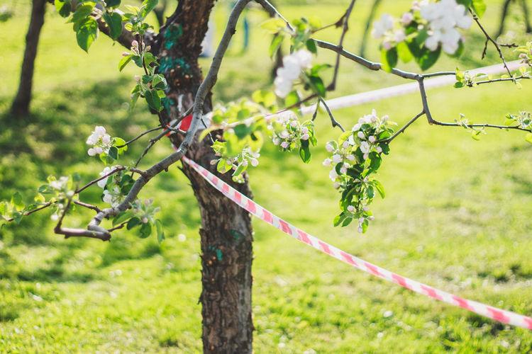 Cordon tape on tree at park
