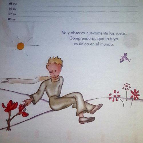 Hermosos pasajes Instapic ElPrincipito Rosas Turosaesunicaenelmundo