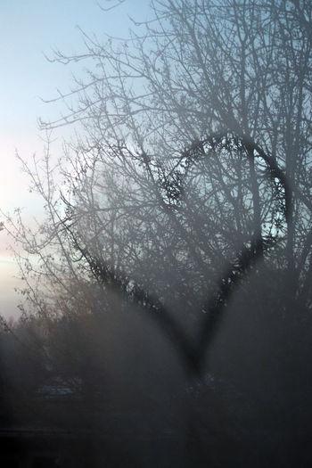 Heart on Wet