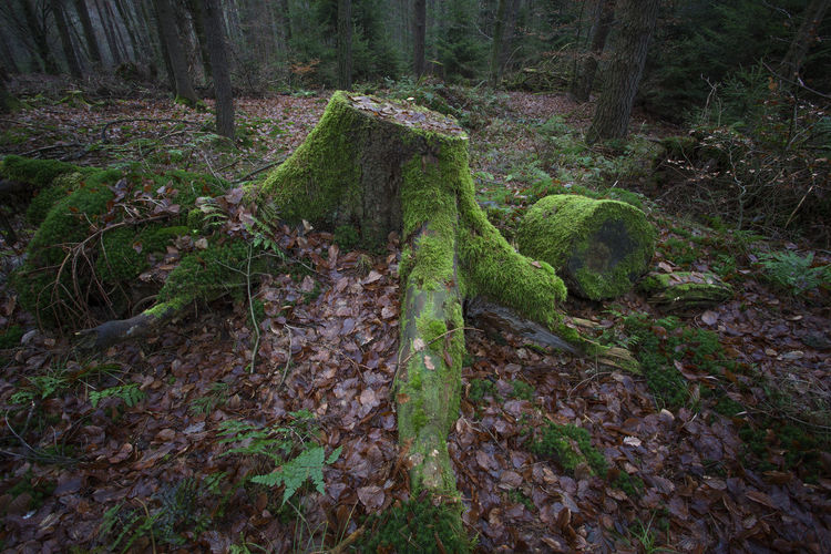 Plants growing on tree trunks in forest