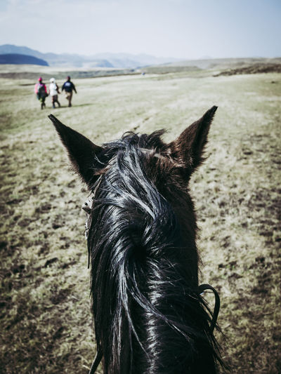 Personal perspective of horseback riding in lesotho