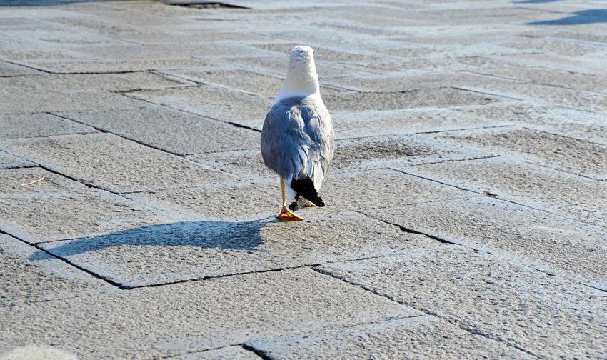 Seagull perching on ground