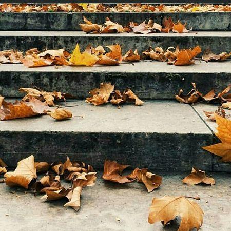 Fall Beauty Autumn Leaves Coldbreeze