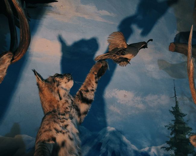 From a trip to Taxidermy Museum in Medan INDONESIA. Animal Themes Animals In The Wild Mammal Animal Wildlife Feline Outdoors Nature Rahmat Shah Rahmat Museum Chance Encounters