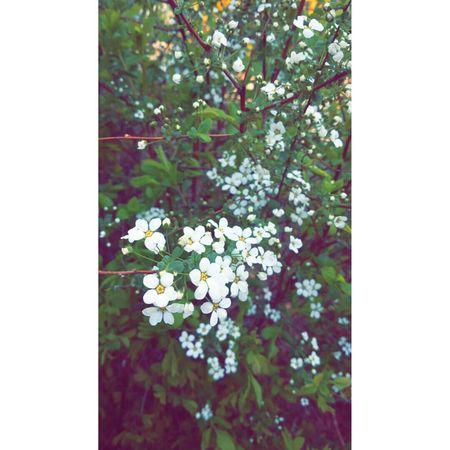 Spring 봄 Flower 일상 Gpro2 Daliy Snap 꽃