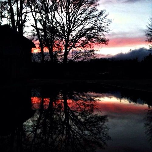 Sunset Silhouette Water Reflections Naked Trees