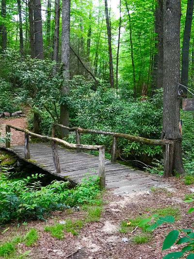 The foot bridge Plant Tree Forest Green Color Growth Land Beauty In Nature Tranquility No People Nature Day Tree Trunk Tranquil Scene Non-urban Scene Outdoors Scenics - Nature Lush Foliage WoodLand