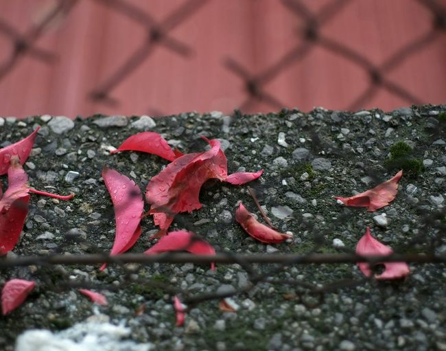 Breaking the cage Autumn Colors Leaf Autumn Beauty In Ordinary Things From My Point Of View Patterns & Textures Walking Around Pattern, Texture, Shape And Form Getting Inspired Exceptional Photographs Ladyphotographerofthemonth Eye4photography  Street Photography EyeEm Gallery Thursdaymood Rainy Day Fragile Beauty My Unique Style Textured  Decayed Beauty