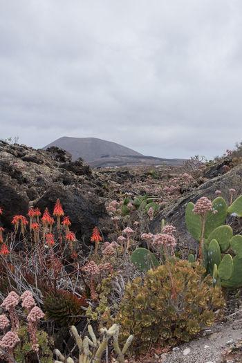 Plants growing on landscape against sky