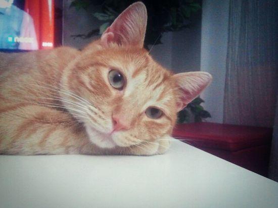 Kero Kitty Cat