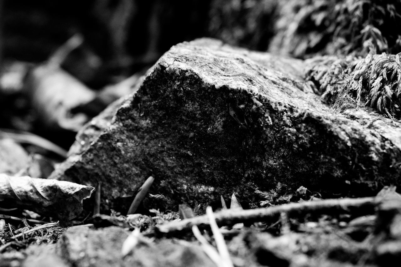 selective focus, close-up, no people, nature, rock - object, rock, day, plant, solid, land, field, growth, outdoors, plant part, tree, leaf, textured, focus on foreground, cold temperature, winter, toadstool