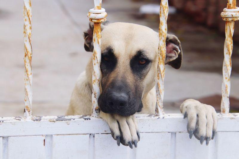 EyeEm Selects Mammal Animal Animal Themes Domestic Animals One Animal Domestic Dog