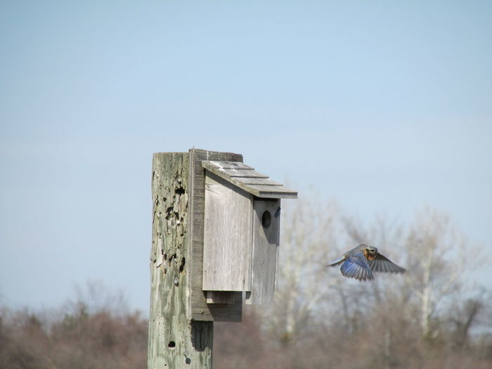 Bird flying close to wooden rustic birdhouse