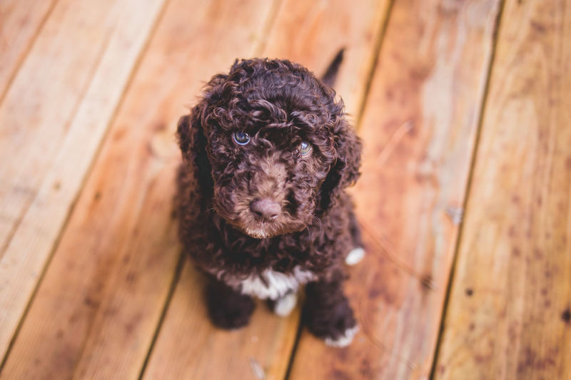 Portrait of a dog on wooden floor
